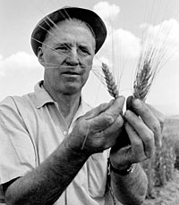 Norman Borlaug, March 25, 1914 – September 12, 2009